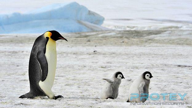 160112130027_penguins_emperor_chicks_624x351_thinkstock_nocredit.jpg
